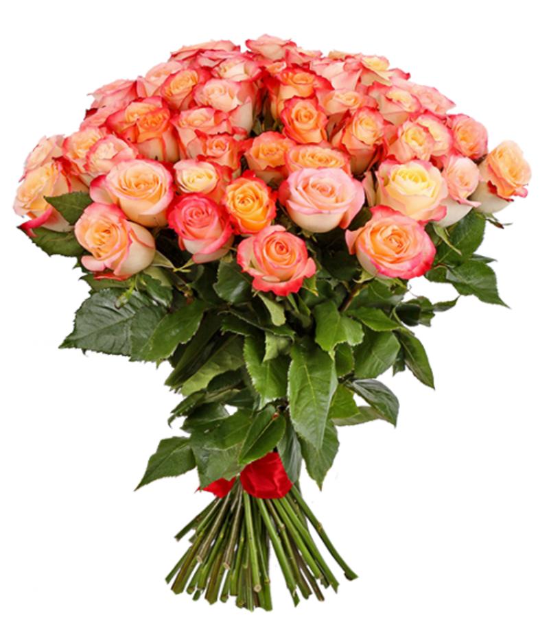 Букет 51 роза эквадор 60см(выбрать цвет)