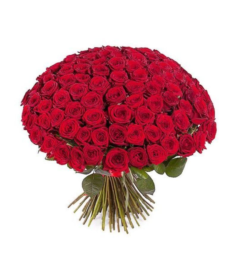 Букет 101 красная роза Эквадор (40см)