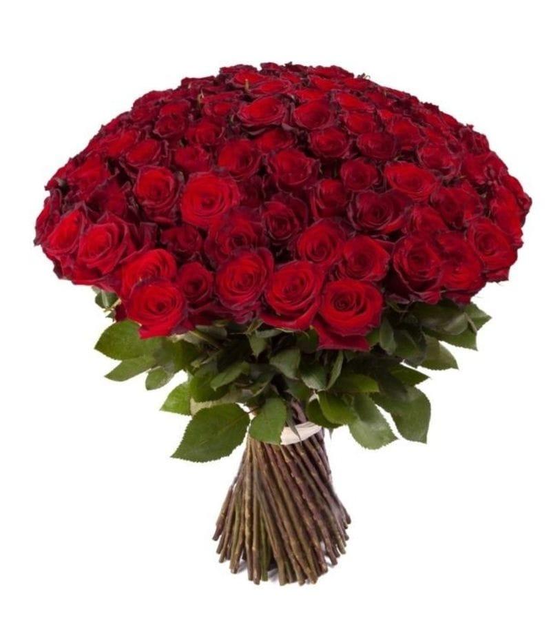 Букет 101 красная роза Эквадор (50см)