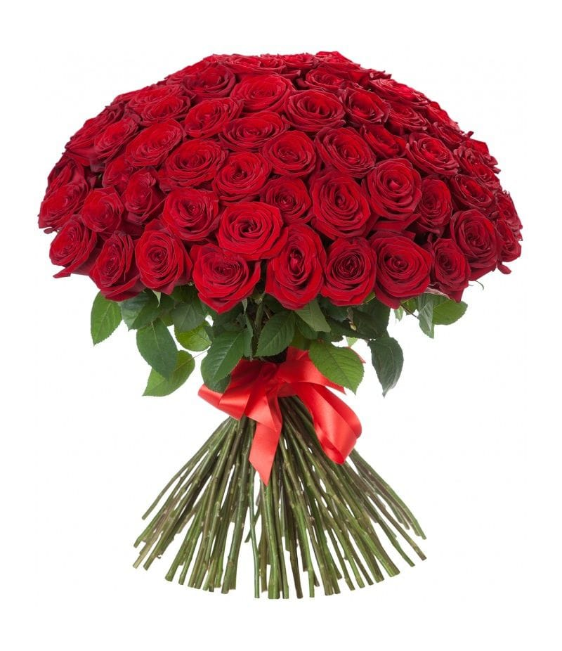 Букет 101 красная роза Эквадор (60см)