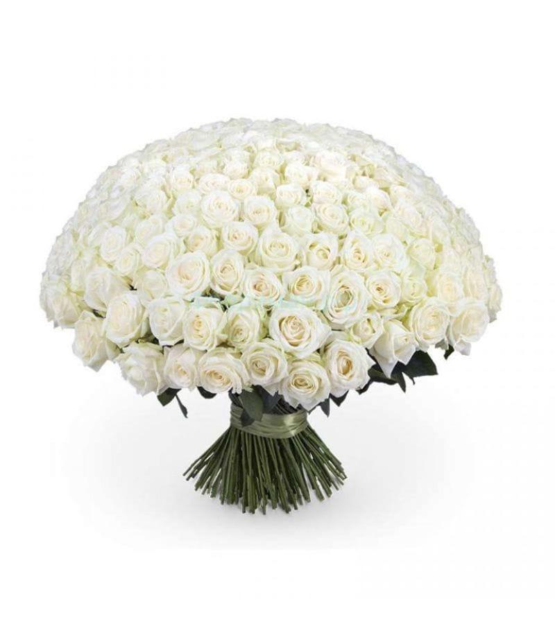 Букет 101 белая роза Эквадор (50см)