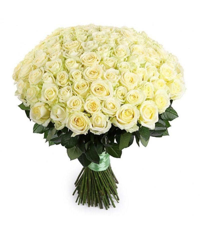 Букет 101 белая роза Эквадор (60см)