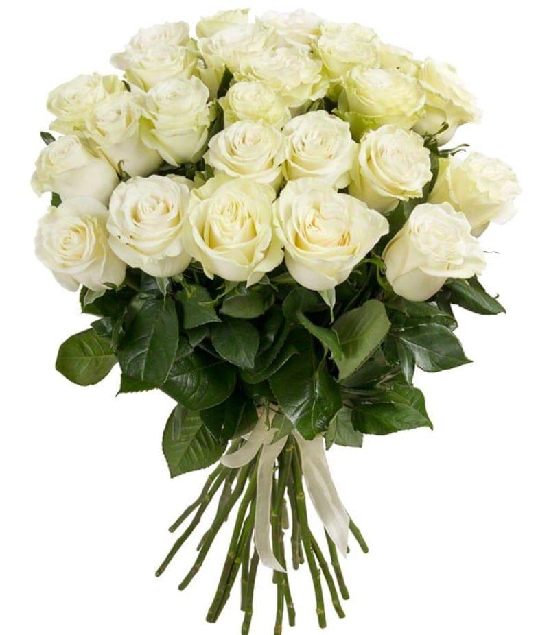 """Розы """"Альба"""" 50 см  25шт"""