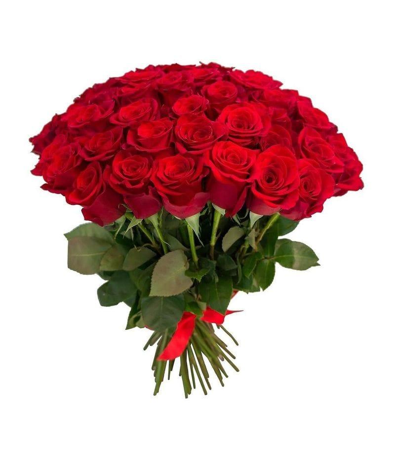 Букет 51 красная роза Эквадор (40см)