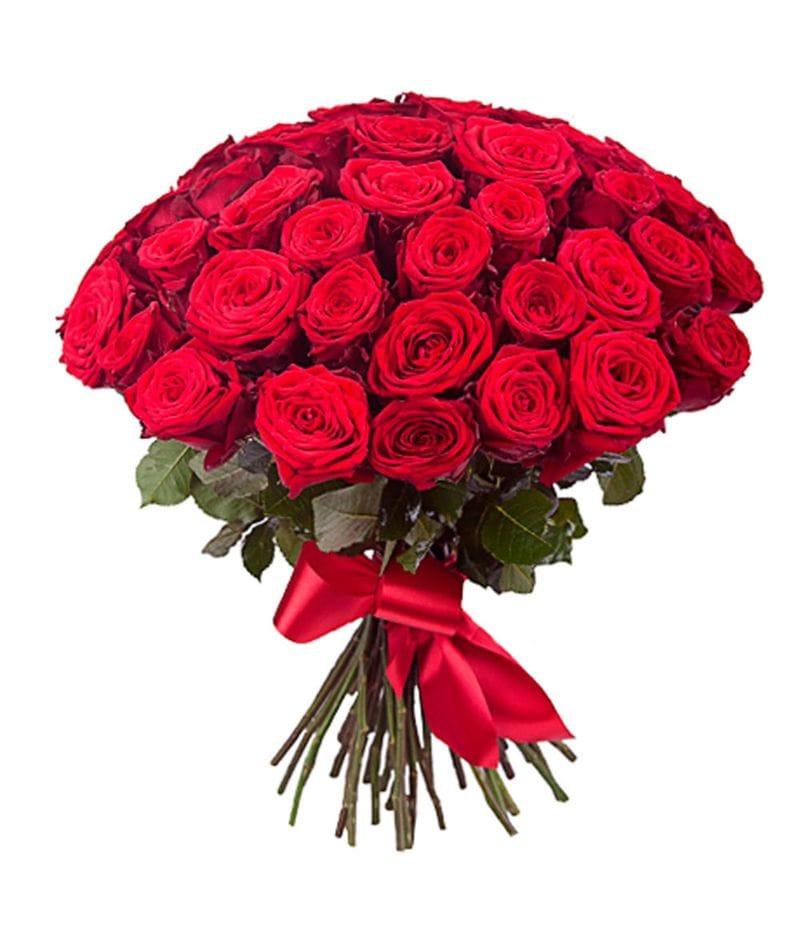 Букет 51 красная роза Эквадор (50см)
