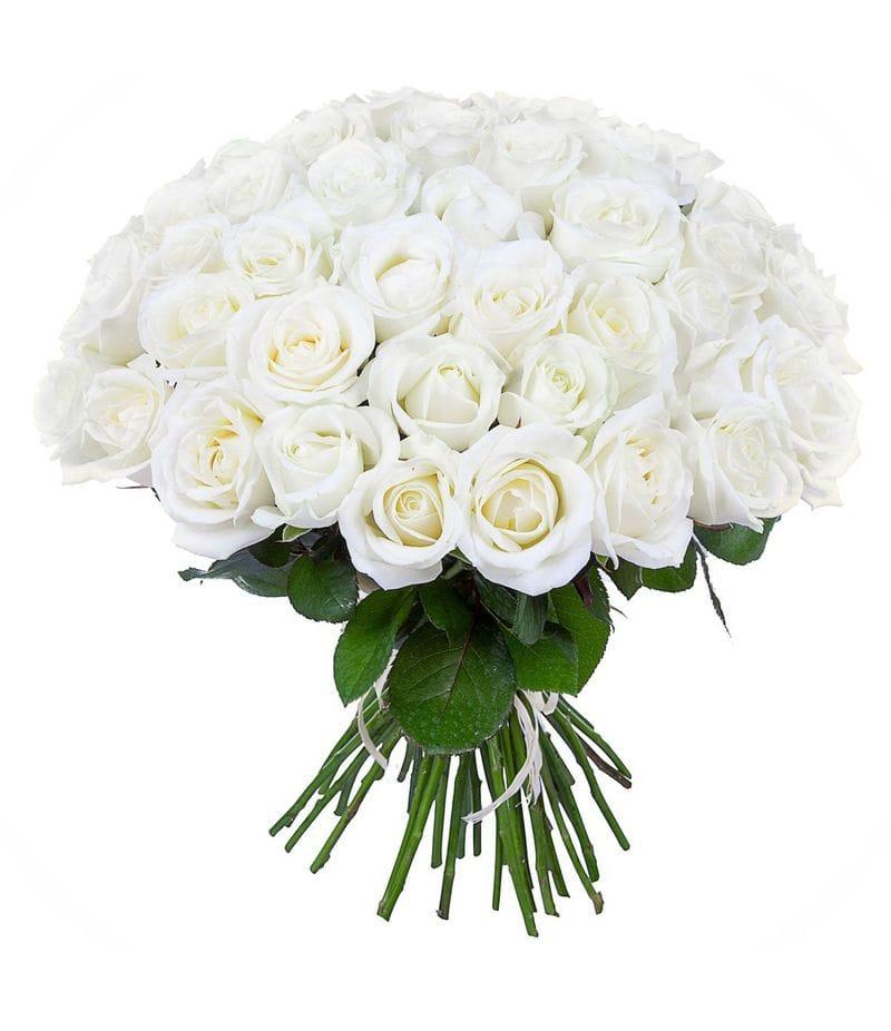 Букет 51 белая роза Эквадор (40см)