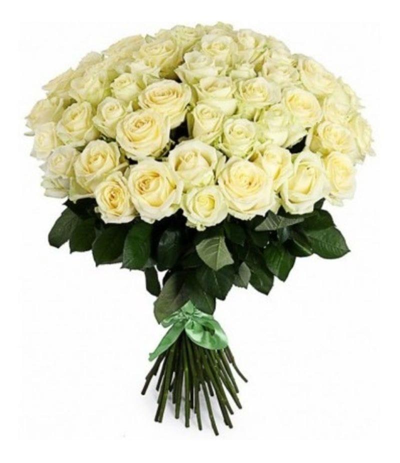 Букет 51 белая роза Эквадор (50см)