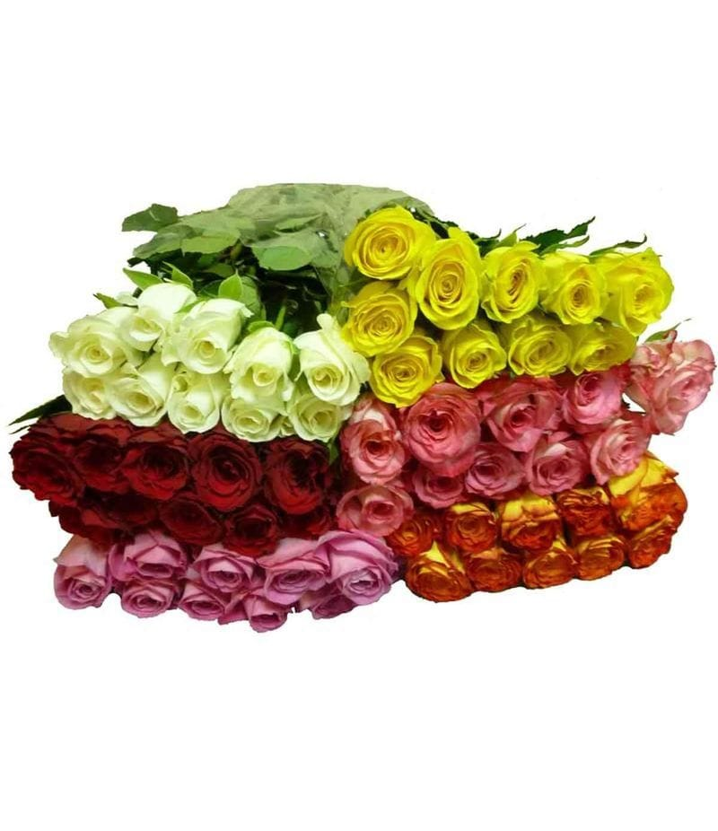 Роза Кения 40см - 10шт