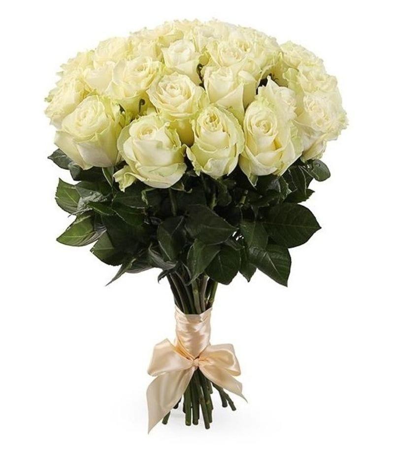 Букет 25 белых роз Эквадор(60см)