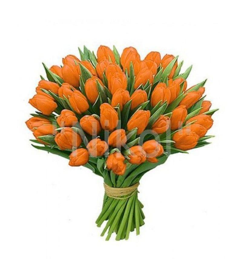 Тюльпан оранжевый