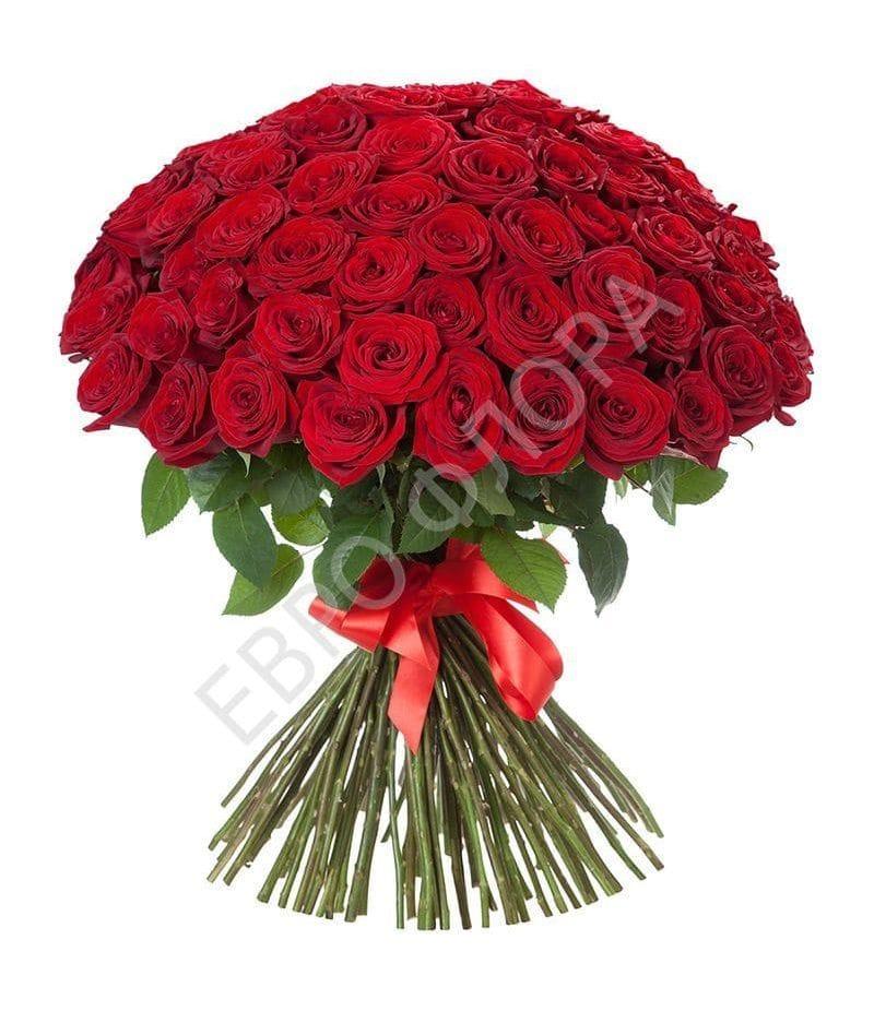 Букет 101 Красная роза Эквадор (70 см)