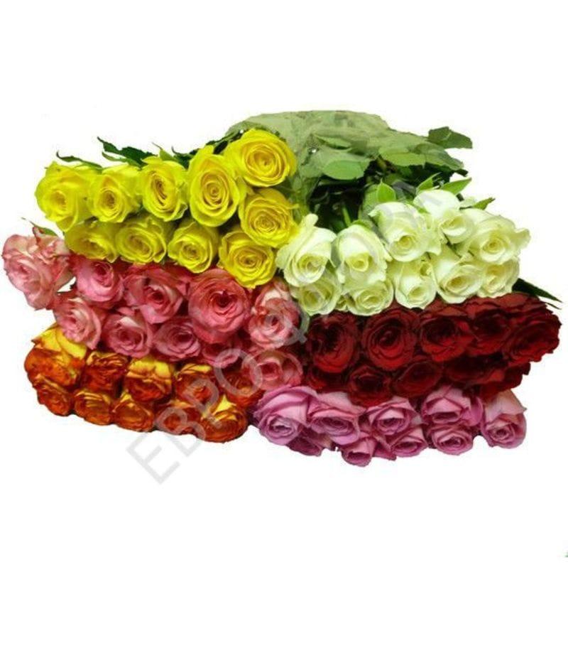 Роза Кения 50см - 10шт